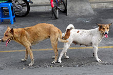 Video Dogs Mating