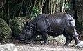 One Horned Rhinocerous 06.jpg