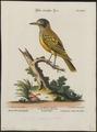 Oriolus melanocephalus - 1700-1880 - Print - Iconographia Zoologica - Special Collections University of Amsterdam - UBA01 IZ16400203.tif
