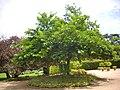 Orléans - parc floral (39).jpg