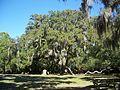 Ormond Beach FL Bulow Creek SP Fairchild Oak01.jpg