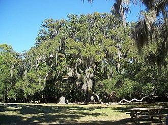 Bulow Creek State Park - Image: Ormond Beach FL Bulow Creek SP Fairchild Oak 01