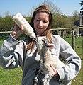 Orphan lamb.jpg