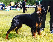Gifts for Gordon Setter Dog Lovers