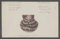 Ostrea pallium - - Print - Iconographia Zoologica - Special Collections University of Amsterdam - UBAINV0274 075 01 0063.tif
