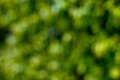 Out of Focus Green Backgounds-19.jpg