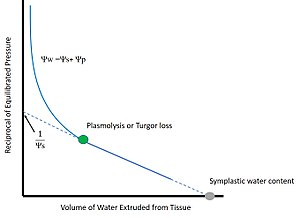 Scholander pressure bomb - Simplified Pressure-Volume Curve