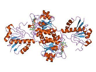 D-lactate dehydrogenase - Image: PDB 2dld EBI