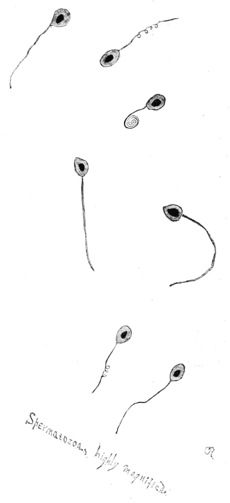 PSM V61 D203 Salmon spermatozoa for artificial propagation