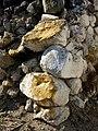 Painted Rocks (697627710).jpg