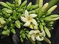 Papaya Carica papaya female flowers by Dr. Raju Kasambe DSCN9640 (4).jpg
