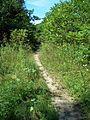 Parc-nature du Bois-de-l-ile-Bizard 19.jpg