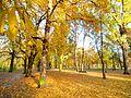 Park Zdrojowy w Ciechocinku.jpg