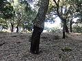 Parque natural de Los Alcornocales (Cádiz, España) 07.JPG