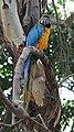 Parrot (400936705).jpg