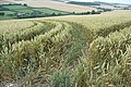 Patterns in the wheat - geograph.org.uk - 917071.jpg