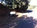Pedra do Galo - panoramio.jpg