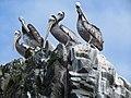 Pelicanos thagus.jpg