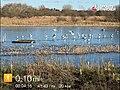 Perchy Pond - panoramio.jpg