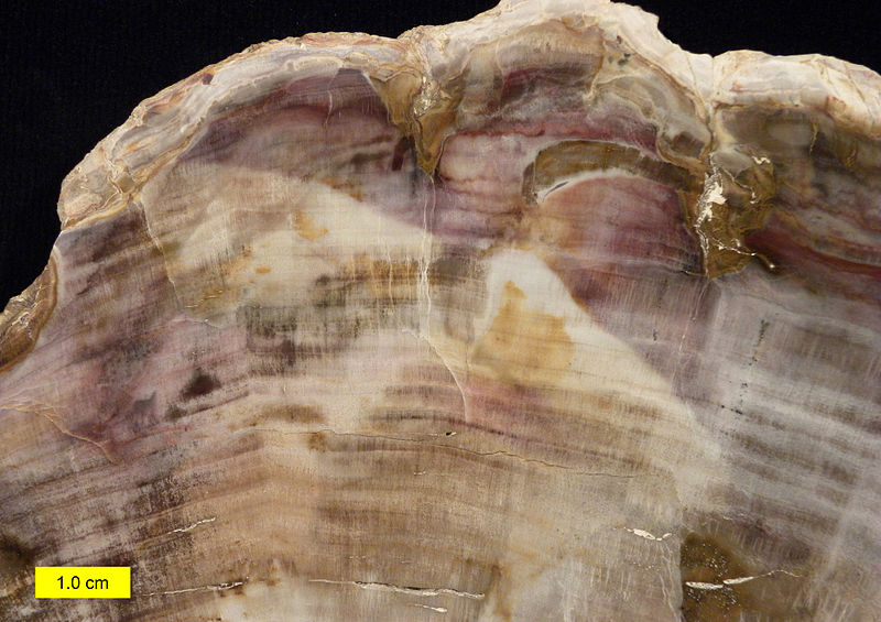 Petrified wood close 052615.jpg