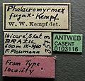 Phalacromyrmex fugax casent0103116 label 1.jpg
