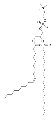 An example of a phosphatidylcholine, a type of phospholipid in lecithin.