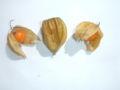 Physalis peruviana.jpg