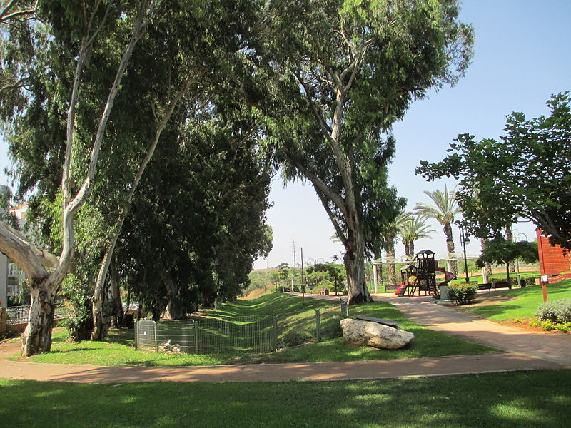 גן האקליפטוס ברמת אפעל