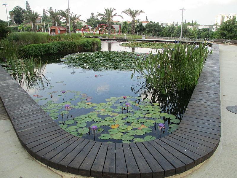 גן בעברית בראשון לציון-בריכה אקולוגית