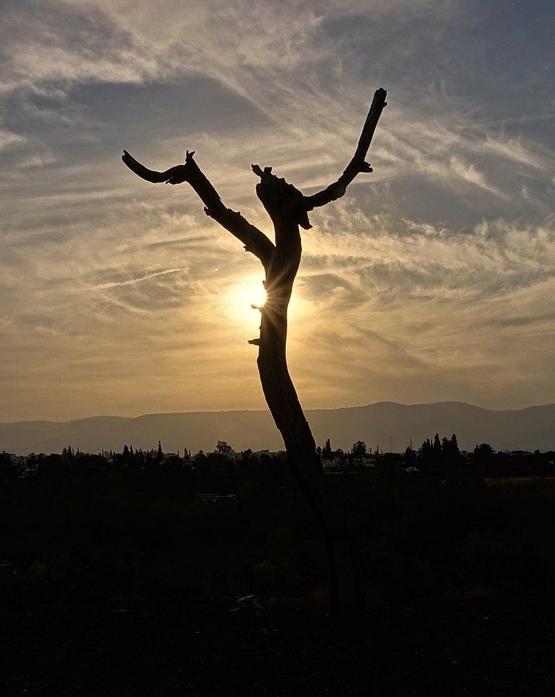 העץ הבודד בתל בית שאן