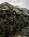 Pirin-2014-Hvojnati-Vihren01.jpg