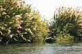 Pirogue fleuve Senegal.jpg