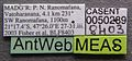 Platythyrea bicuspis casent0050289 label 1.jpg