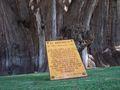 Poema-Árbol-del-Tule-Oaxaca-Mexico.jpg