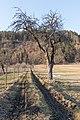 Poertschach Winklern Am Kåte Feldweg durch Streuobstwiese 27022015 0154.jpg