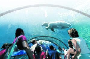 Detroit Zoo - Photo by Donna Terek