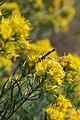 Pollinators0024.tif (38153543625).jpg