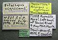 Polyergus nigerrimus casent0173333 label 1.jpg