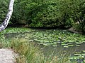 Pond and Pulhamite feature, Knighton Wood, Woodford Green.jpg