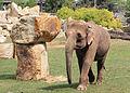 Prague Zoo - elephant.jpg