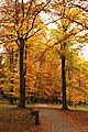 Praha, Holešovice, Stromovka, podzimní listí III.jpg