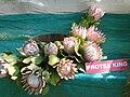 Protea King.jpg