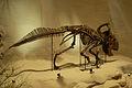 Protoceratops at CMNH.jpg