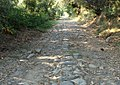 Prunelli-Strada romana soprana.jpg