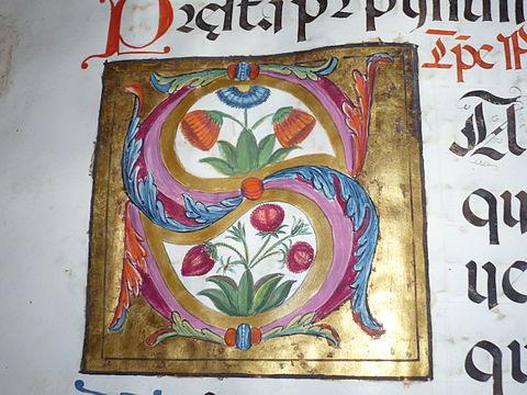 Kells Style Illuminated Letter S