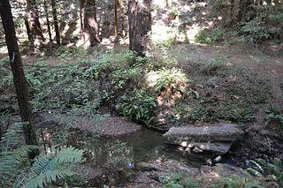 Purisima Creek (San Mateo County)