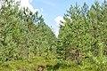 Purva stiga Maztīrelī, Valgundes pagasts, Jelgavas novads, Latvia - panoramio.jpg