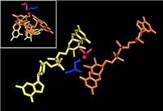 DMSO reductase - Image: Pymolactivesite