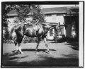 Quidron, General Pershing's horse LCCN2016828691.tif