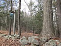 Quinebaug Woods, Holland MA.jpg